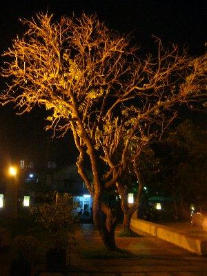 夜景-TREE2